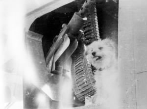 321st BG, 447th BS, Lt Shapiro's little dog SCRAPPY also died in the B-25 LOSS
