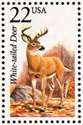 White-tailed deer.gif